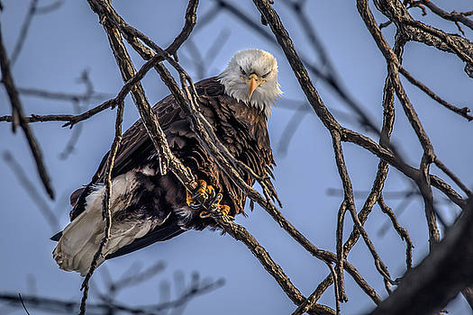 Oh That Look by Ray Congrove