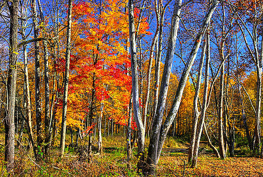 Ohio Country Roads - Autumn Colorfest No. 1 - Near Middle Road Covered Bridge, Ashtabula County by Michael Mazaika