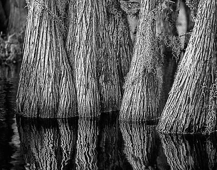 Okefenokee Cypress by Rod Kaye