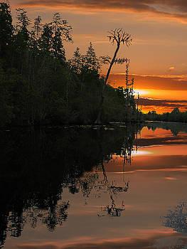 Okefenokee Swamp by Jim Wright
