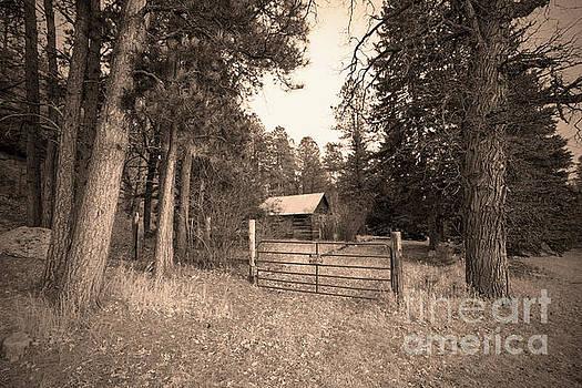 Old Cabin by Steve Triplett