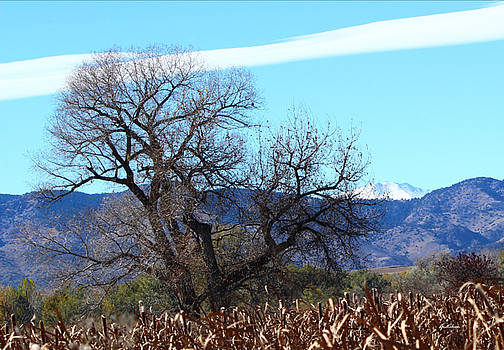 Old Cottonwood Tree Rises to Grace Rocky Mountains by Gretchen Wrede