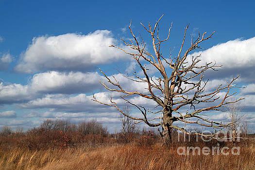 Old Dead Tree by Jeff Holbrook