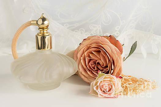Old English Rose by Ann Garrett