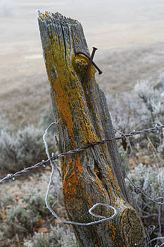 Old Fence by Jerry McElroy