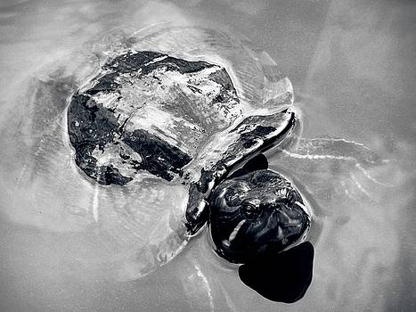 Old man in a pond Turtle by Kathy Daxon