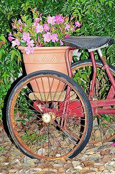 Old Tricycle by Susan Leggett