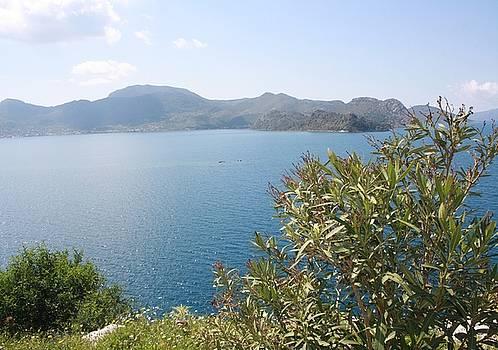 Tracey Harrington-Simpson - Oleander Againt The Aegean near Selimiye
