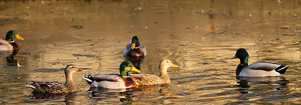 On Golden Pond by Betty Morgan