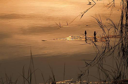 On Golden Pond by Olwen Evans
