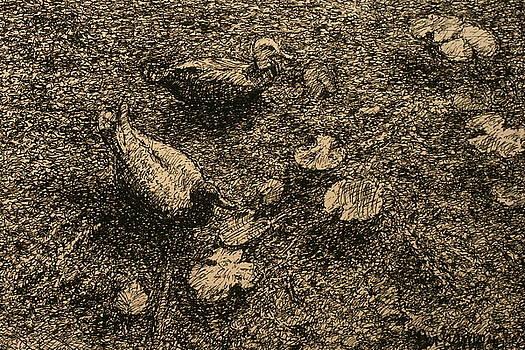 Terry Perham - On The Pond