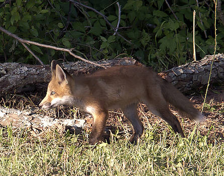 On the Prowl by Jim E Johnson