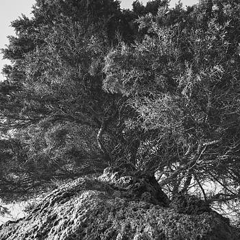 On The Rocks by Cesare Bargiggia