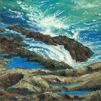 On the Rocks by Elaine Farmer