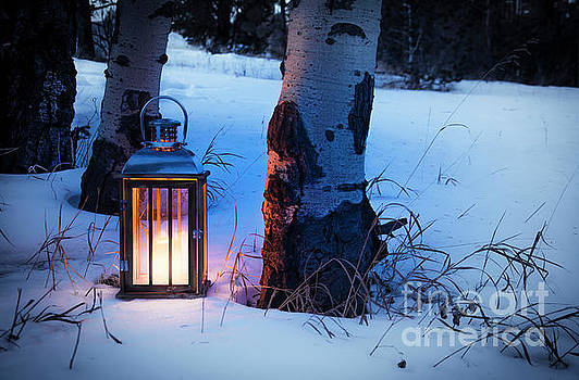On This Winter's Night... by The Forests Edge Photography - Diane Sandoval
