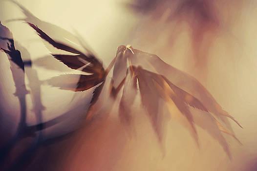 Jenny Rainbow - On Warm Wings of Love