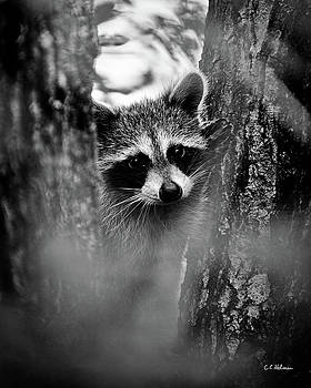 Christopher Holmes - On Watch - BW