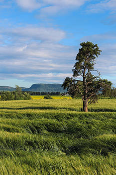 Ontario Farmland by Tingy Wende