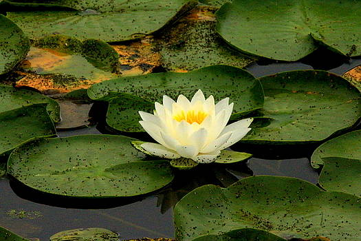 Once Upon a Lily Pad by Suzanne DeGeorge