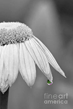 One Drop of Reflection by Lila Fisher-Wenzel