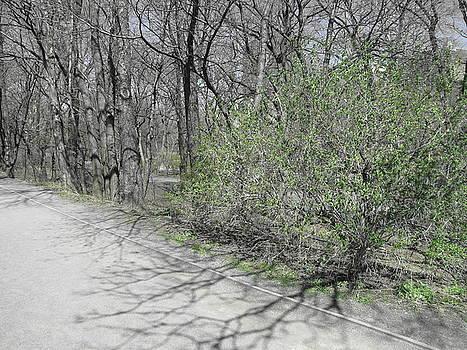 One Green Bush by Peter Aiello