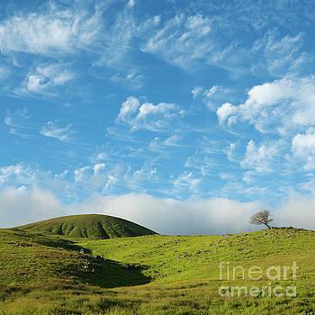 Charmian Vistaunet - One Tree Hill