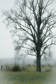 One Tree by Karl Anderson