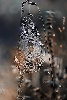 Jenny Rainbow - One Winter Morning