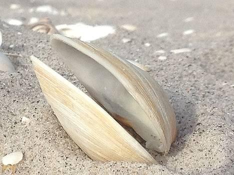 Open Shell by Kathrine Fisker
