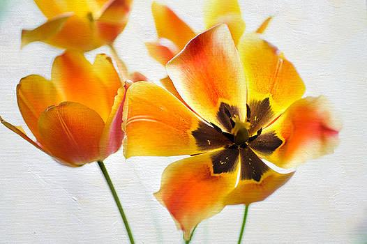 Jenny Rainbow - Open Yellow Tulips