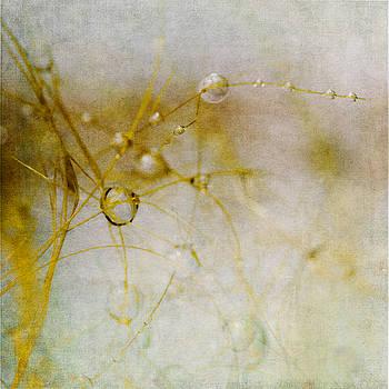 Opus No. 3 by Ryan Weddle