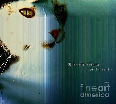 Or it's a cat by Steven  Digman