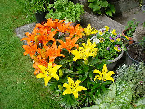 Orange And Yellow Lilies by Jay Milo