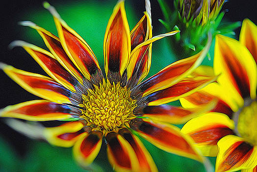 Cindy Boyd - Orange and Yellow Striped Flower