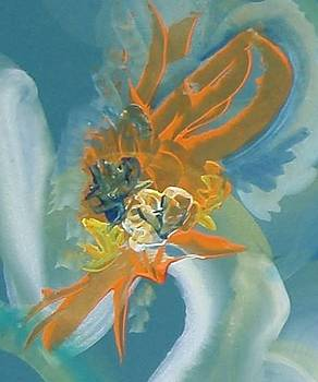 Orange Beauty by Vlado  Katkic