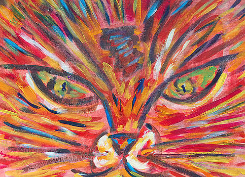 Orange Cat by Carolyn Donnell