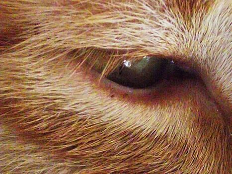 'Orange Cats Eye' by Paula  Heffel