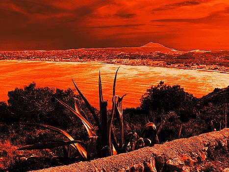 Orange Coast by Ingrid Dance