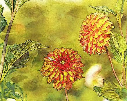 Orange Dahlia by Marilyn Peterson