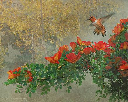 Orange Diagonal Rufous Hummingbird by R christopher Vest