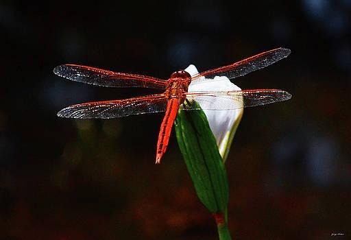 Orange Dragonfly On An Iris 001 by George Bostian