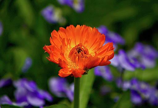 Orange Flower 003 by George Bostian