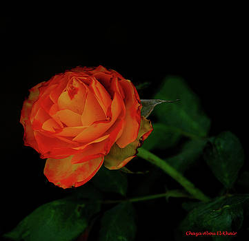 Orange flower by Chaza Abou El Khair