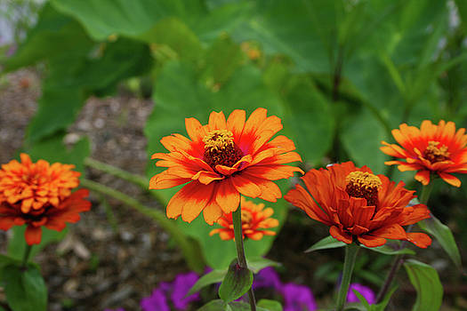 Orange Flowers by Cathy Harper