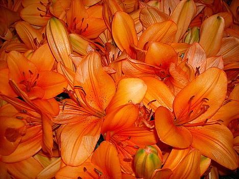 Orange flowers by Liliana Ducoure
