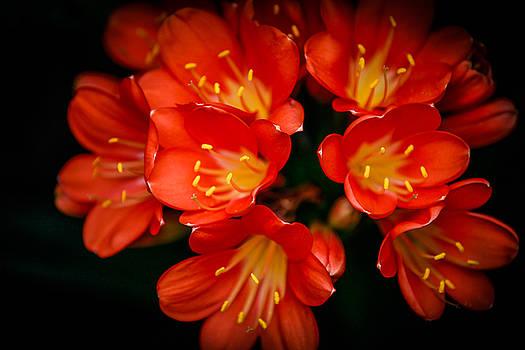 Orange Flowers by Ray Congrove