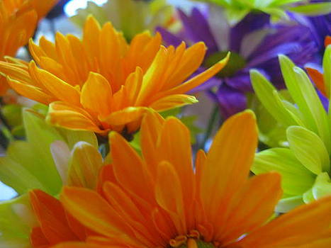 Orange Flowers by Terry and Brittany Sprinkle