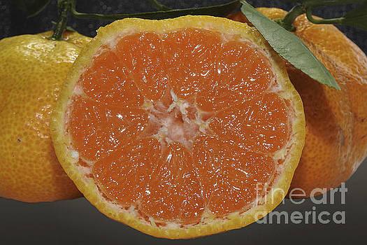 Orange Fruit Slices by Ella Kaye Dickey