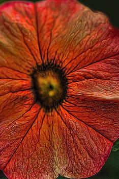 Cindy Boyd - Orange Hibiscus
