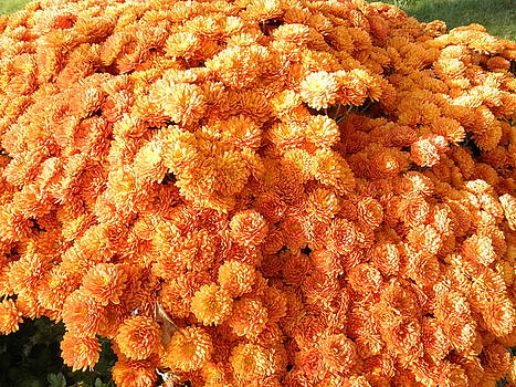 Orange Mums by Barbara Keith